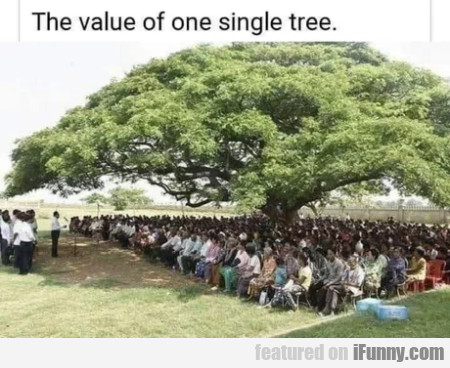 The Value Of One Single Tree