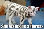 She Wants Be A Tigress
