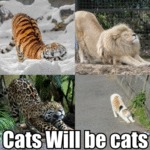 Cats Will Be Cats