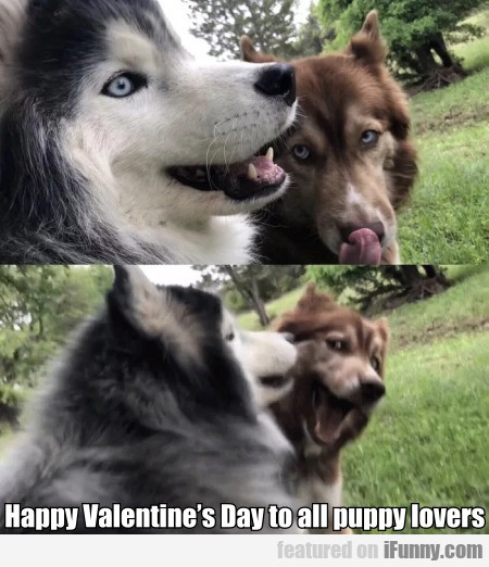 Happy Valentine's Day To All Puppy Lovers