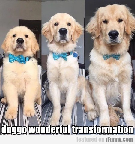 Doggo Wonderful Transformation