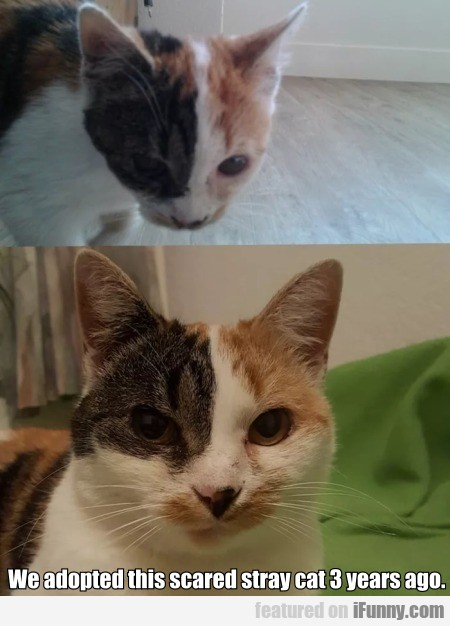We Adopted This Scared Stray Cat 3 Years Ago
