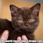 The World Needs More Brown Cats