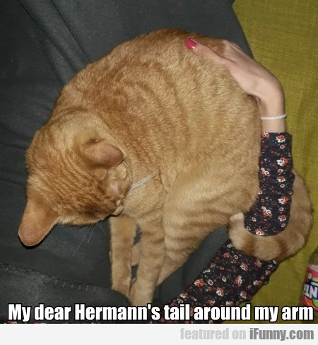 My Dear Hermann's Tail Around My Arm...