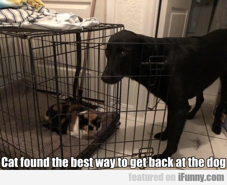 Cat Found The Best Way To Get Back At The Dog