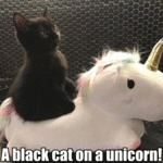 A Black Cat On A Unicorn!
