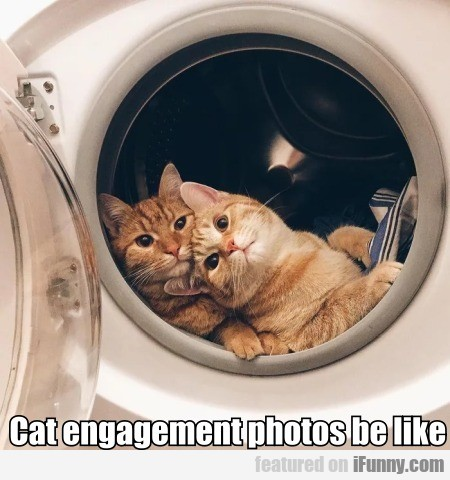 Cat Engagement Photos Be Like