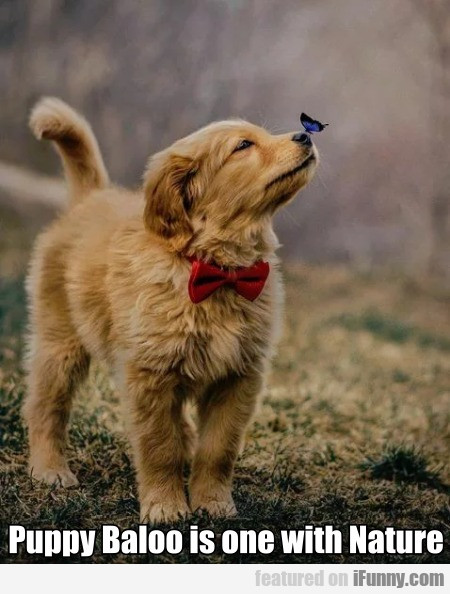 Puppy Baloo Is One With Nature