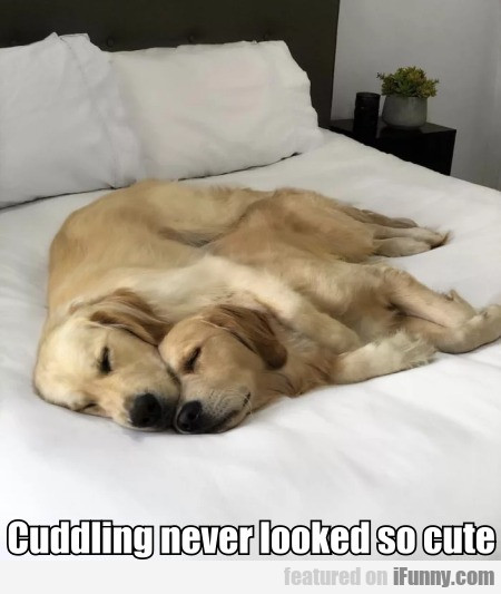 Cuddling never looked so cute