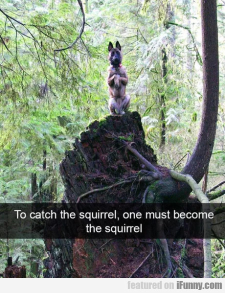 To catch the squirrel one must become the squirrel