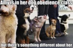 Amy Is In Her Dog Obedience Class, But There's...