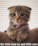 His Little Bow Tie And Little Ears