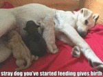 Stray Dog You've Started Feeding Gives Birth