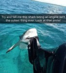Try And Tell Me This Shark Biting An Engine...
