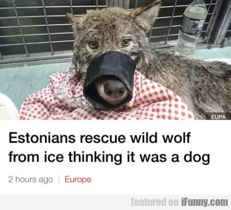 Estonians Rescue Wild Wolf From Ice Thinking...