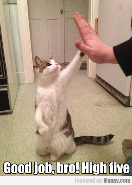 Good Job, Bro! High Five