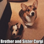 Brother And Sister Corgi