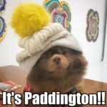It's Paddington!!