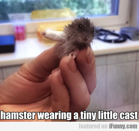 hamster wearing a tiny little cast