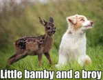 Little Bamby And A Broy