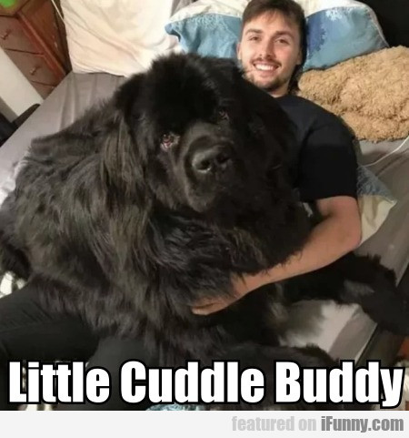 Little Cuddle Buddy