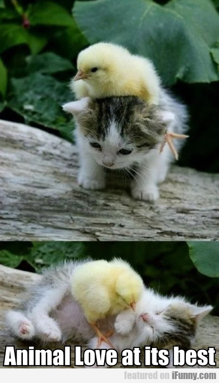 Animal Love At Its Best