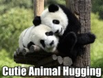 Cutie Animal Hugging