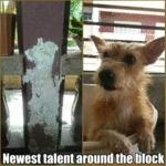 Newest Talent Around The Block...