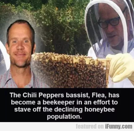 The Chilli Peppers Bassist, Flea, Has Become A...