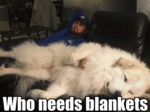 Who Needs Blankets?