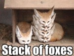 Stack Of Foxes