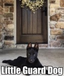 Little Guard Dog