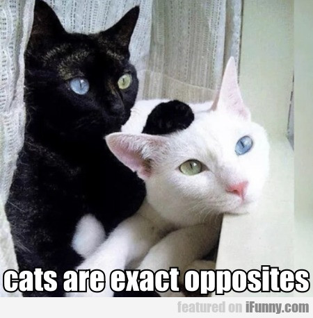 Cats Are Exact Opposites