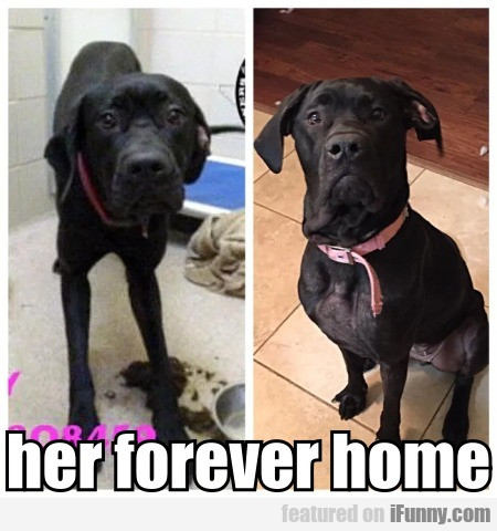 Her Forever Home