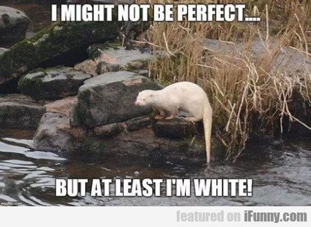I Might Not Be Perfect....but At Least I'm White!