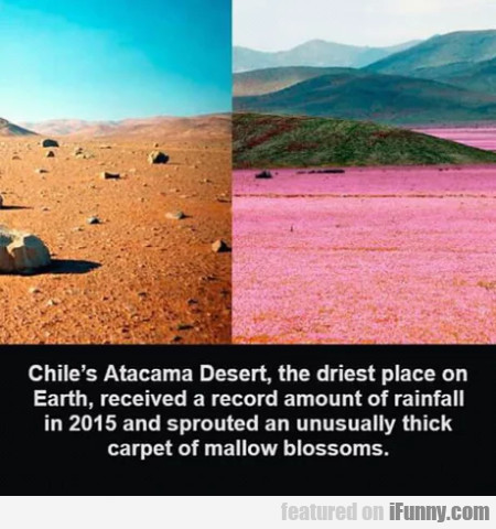 Chile's Atacama Desert, The Driest Place On...