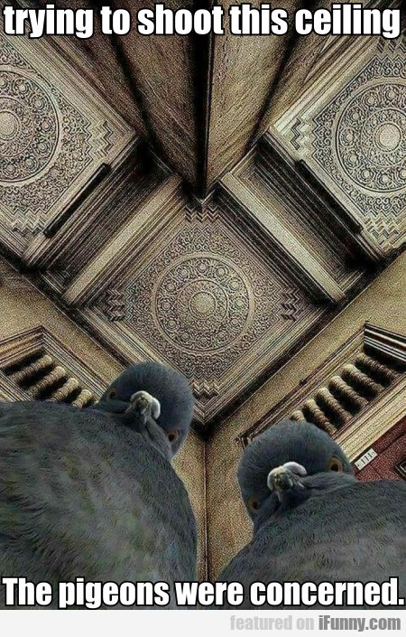 Trying To Shoot This Ceiling. The Pigeons Were...