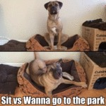 Sit Vs Wanna Go To The Park