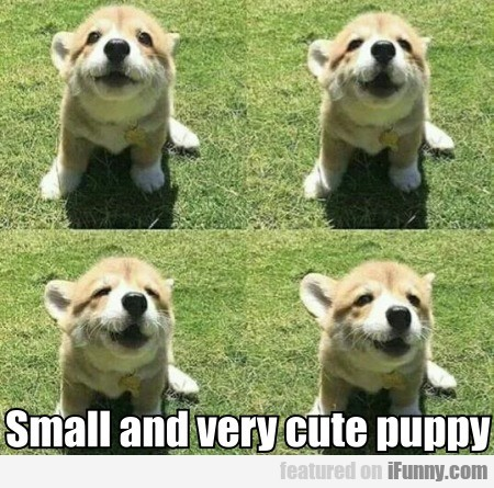 Small And Very Cute Puppy