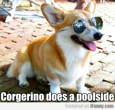 Corgerino Does A Poolside