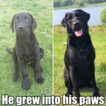 He Grew Into His Paws
