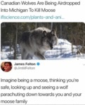 Canadian Wolves Are Being Airdropped Into...