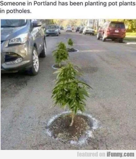 Someone In Portland Has Been Plating Pot Plants...