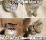 This Is Foo-chan, The Japanese Equivalent...