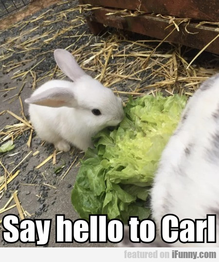 Say Hello To Carl