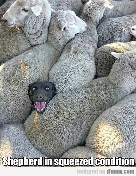 Shepherd In Squeezed Condition