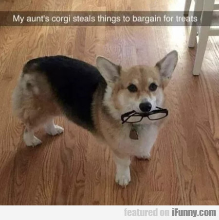 My Aunt's Corgi Steals Things To Bargain For Treat