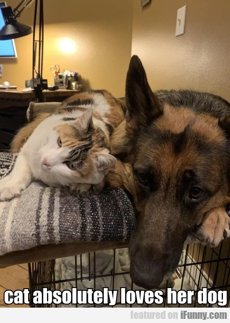Cat Absolutely Loves Her Dog