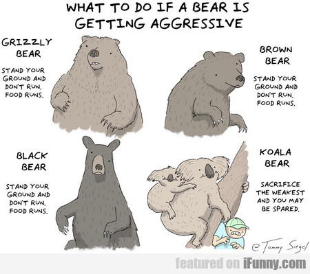 What To Do If A Bear Is Getting Aggressive