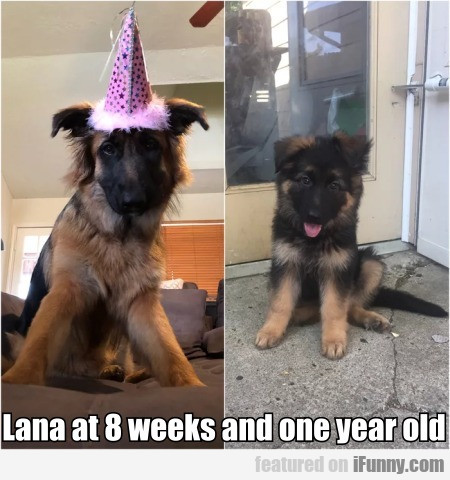 Lana At 8 Weeks And One Year Old